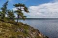 Старожилы озера Ожогино.jpg