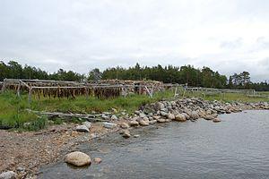 Arkhangelsk Oblast - Dried fish in Solovetsky Islands.