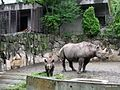 上野動物公園, Ueno Zoo(Ueno Zoological Gardens) - panoramio (30).jpg