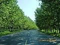 安徽省巢湖市含山县郊区公路 - panoramio (1).jpg