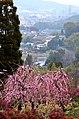 普光寺から大牟田の街を望む - panoramio.jpg
