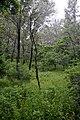 森林公园 - panoramio (1).jpg