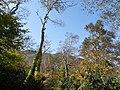 長沼の路 - panoramio.jpg