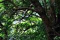 陽明山水管路 - panoramio (4).jpg