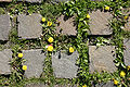 - Cobblestone and flowers -.jpg