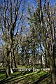 05-210-5021, Браїлівський парк.jpg