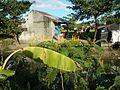 07868jfPaddy fields villages Pulong Palazan Candaba Pampanga Farm to Market Roadfvf 05.jpg
