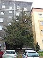 123 cis Grunwaldzka.jpg