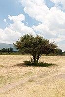 15-07-20-Teotihuacan-by-RalfR-N3S 9492.jpg