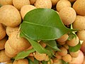 1528Food Fruits Cuisine Bulacan Philippines 13.jpg