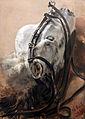 1848 Menzel Pferdestudie 02 anagoria.JPG