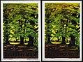 1928 circa Otto Altenkirch Deutscher Wald Reklamemarke In a German Forest.jpg