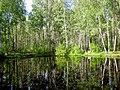 1978. Pond in the park Sosnovka.jpg
