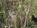 1 Növény L87.jpg
