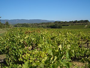 Bouteillan noir - The Vaucluse region where Bouteillan noir was noted to be widely planted in the early 18th century.