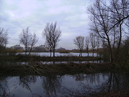 Immerlooplas in het Immerloopark
