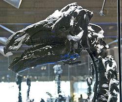 definition of iguanodon