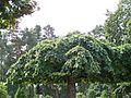 20090822 Bredakra, Kirchhof 3.JPG