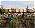 2009 Glenwood community garden Philadelphia 3496476276.jpg