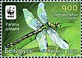 2010. Stamp of Belarus 26-2010-03-08-m1.jpg