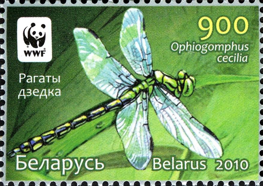 2010. Stamp of Belarus 26-2010-03-08-m1