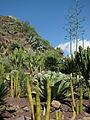 20100222-0306 Gran Canaria (1157).jpg