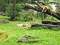 2011-07-05 Zoo Rostock 02.jpg