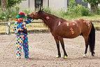 2012 05 27 037 Clown und Pferd.jpg