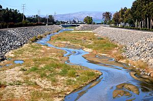 San Diego Creek - San Diego Creek at Alton Parkway in Irvine