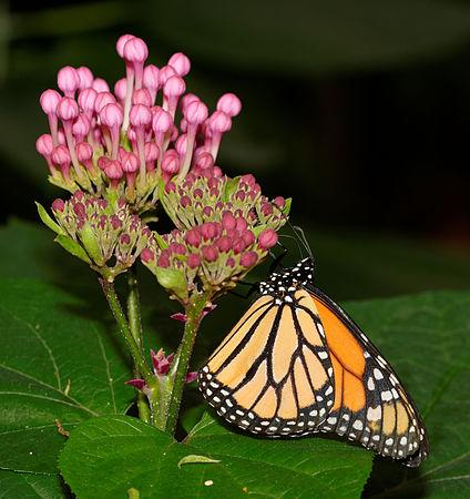 2015-10-24 13-47-35 papillon-hunawihr.jpg