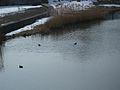 20150219 19 Wienerwaldsee (Large) (16394590818).jpg
