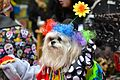 2015 Hallowenn dog costume party 1.jpg