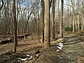 2016-02-08 12 04 40 View north along the Gerry Connolly Cross County Trail between Miller Heights Road and Vale Road in Oakton, Fairfax County, Virginia.jpg