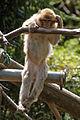 2016-04-21 14-54-26 montagne-des-singes.jpg