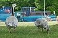 2017-07-04 13-48-56 oiseaux.jpg