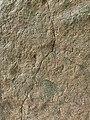 3rd-century BCE Jonnagiri Erragudi Yerragudi Asoka rock edict inscription, Andhra Pradesh India - 100.jpg