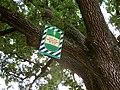 400-літный дуб на вул. Садовій у Полтаві.jpg