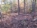 4771137 20071031 1365 Wildcat Rdg Tr Campsite -1137 (33470695892).jpg