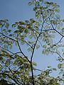 9. zijdeboom foto Sanne Grasdijk.jpg