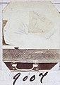 9007 - 01, Acervo do Museu Paulista da USP.jpg