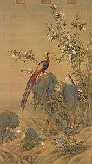 Golden Pheasants in Spring
