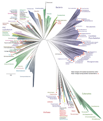 Tree of life (biology) - A 2016 (metagenomic) representation of the tree of life