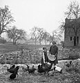 A mother and daughter feed chickens in the garden of their home in Rowney Green, Worcestershire during 1943. D17524.jpg