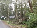 A woodland area alongside the Corbally Road - geograph.org.uk - 2625691.jpg