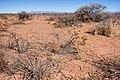 About two miles north-northeast of Cuchillo - Flickr - aspidoscelis (1).jpg