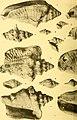 Actes de la Société linnéenne de Bordeaux (1923) (16586259889).jpg