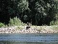 Adler - panoramio - TMbux.jpg