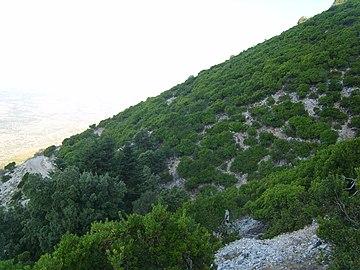 Aenos vegetation.jpg