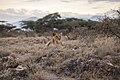 African-landscape-lion (Unsplash).jpg