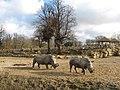 African savanna (and rhinos) in Dublin Zoo - geograph.org.uk - 1754976.jpg